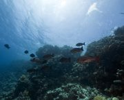 Reef Edge